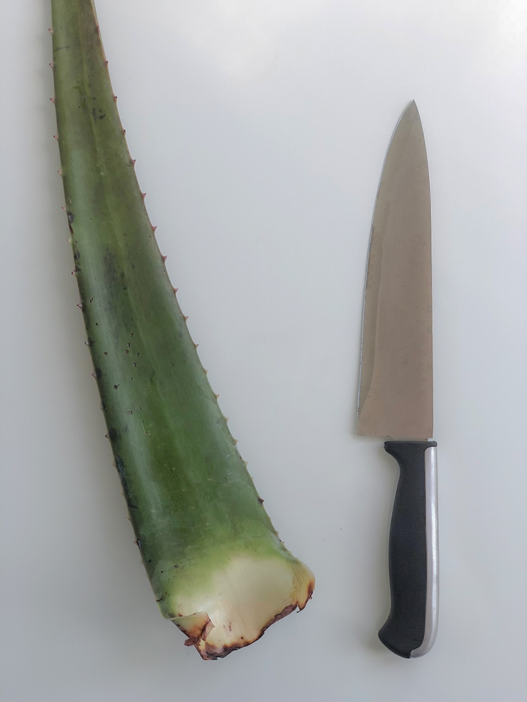 whole aloe with knife.jpg